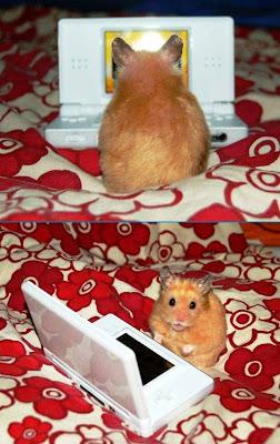 Imagen de un hamster gamer