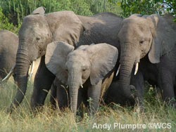 Ivory shouldn't be sold in the U.S.