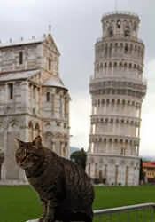 cat by the leaning tower of pisa
