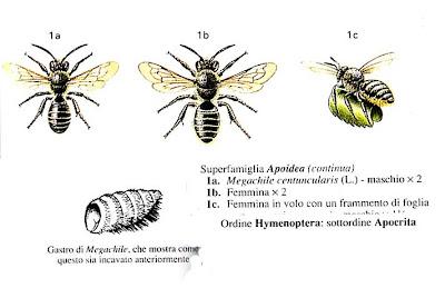 Deladelmur vespe e vespine ii - Nido api finestra ...