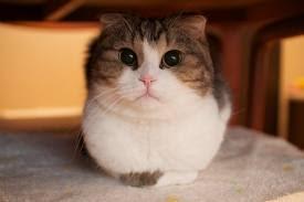 gato forever alone eu adoro morar na internet