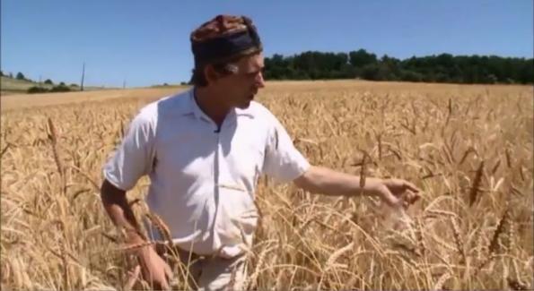 Un boulanger bio explique pourquoi le blé et le gluten sont devenus toxiques Un_boulanger_bio_explique_pourquoi_le_ble_et_le_gluten_est_devenu_toxique