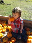 Eating pumpkins fun on the farm