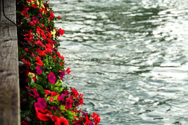 fleurs lucerne pont
