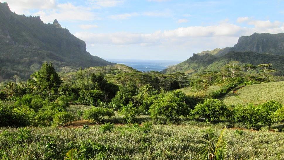 Les champs d'ananas et zone agricole du domaine d'Opunohu