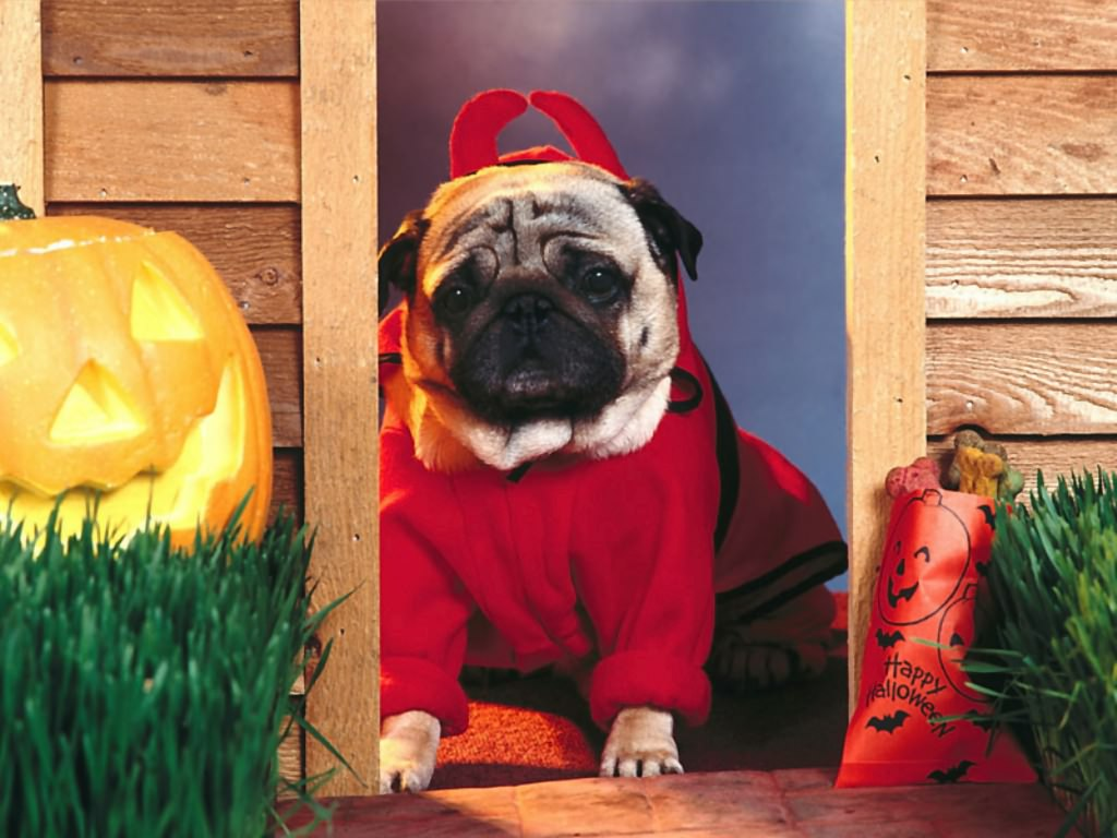 Happy halloween wallpapers fun halloween desktop wallpapers - Funny happy halloween wallpaper ...
