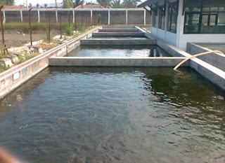 cara budidaya ikan lele, di kolam terpal, gurame, ikan lele sangkuriang di kolam terpal, lele dalam kotak terpal, lele di kolam tembok, lele dumbo, panduan ternak lele,