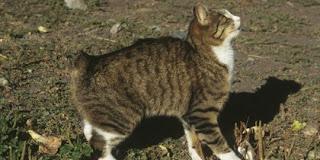 10 Kucing Termahal Di Dunia Fauna Unik Dunia Binatang