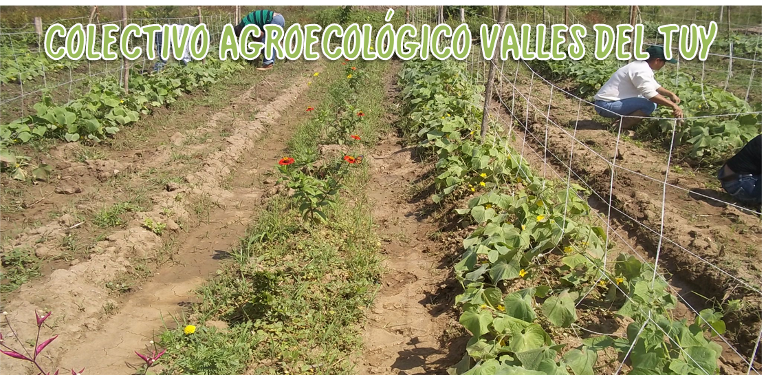 WWW.AGROECOLOGIA-VALLESDELTUY.BLOGSPOT.COM