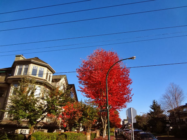 Red foliage, blue sky, Vancouver