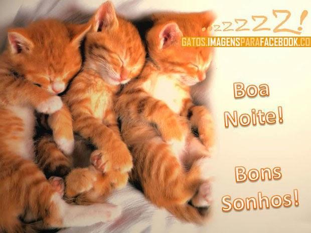 gatinhos dando boa noite