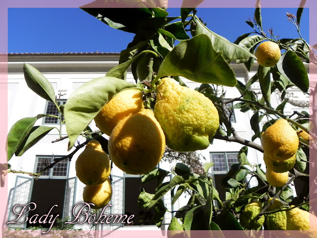 hiperica_lady_boheme_blog_cucina_ricette_gustose_facili_e_veloci_limoni_in_vaso