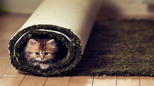 Cute little cat under carpet hd wallpaper animal