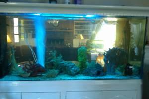 Giant aquariums 300 gallon glass aquarium 1300 for Used 300 gallon fish tank for sale