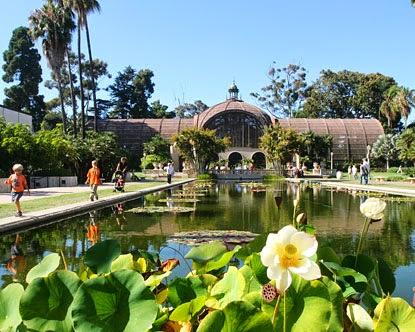 San Diego's Balboa Park Lily Pond