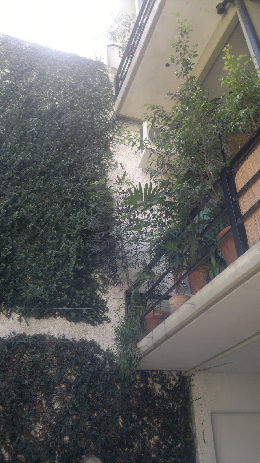 T cnico en jardiner a poda de formaci n y extracci n for Tecnico en jardineria