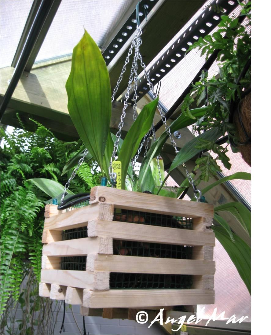 Orqu deas blog de angel mar cestas de madera para orqu deas - Tiestos para orquideas ...