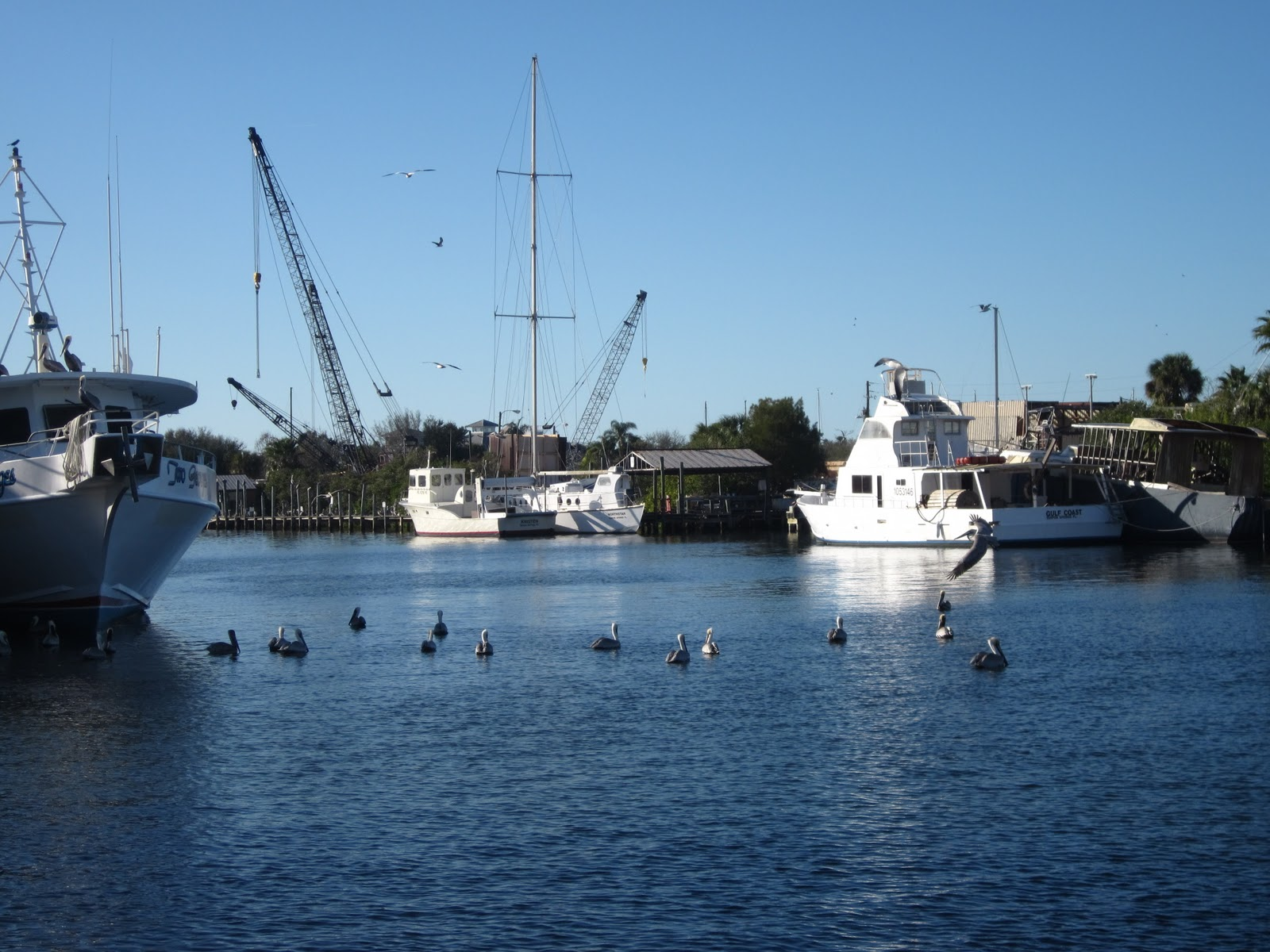 tarpon springs Your one stop guide to tarpon springs florida and the sponge docks.