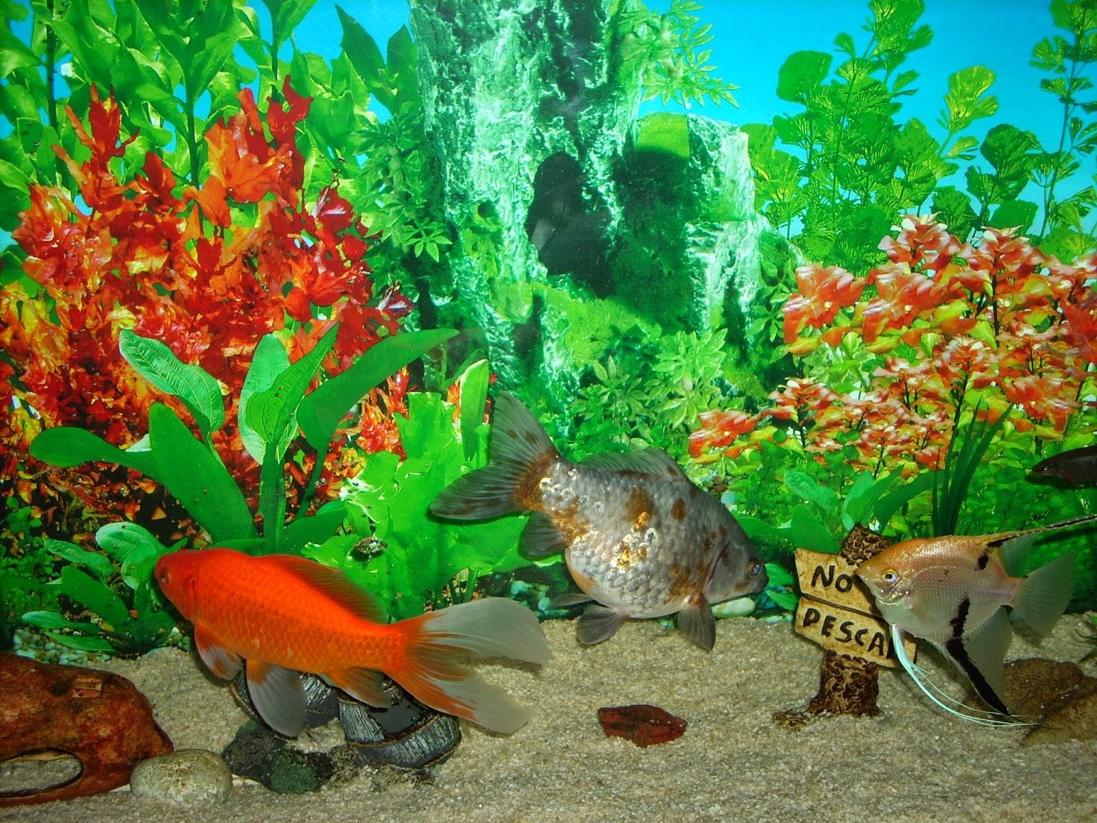 Acuarios decorpez abril 2014 for Peces artificiales para acuarios