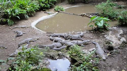 Las Especies de hábitos acuáticos del ZOOMAT