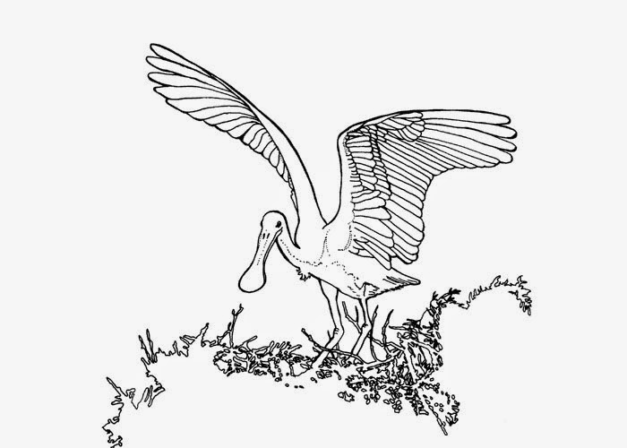 ... bird coloring page | Free Coloring Pages and Coloring Books for Kids