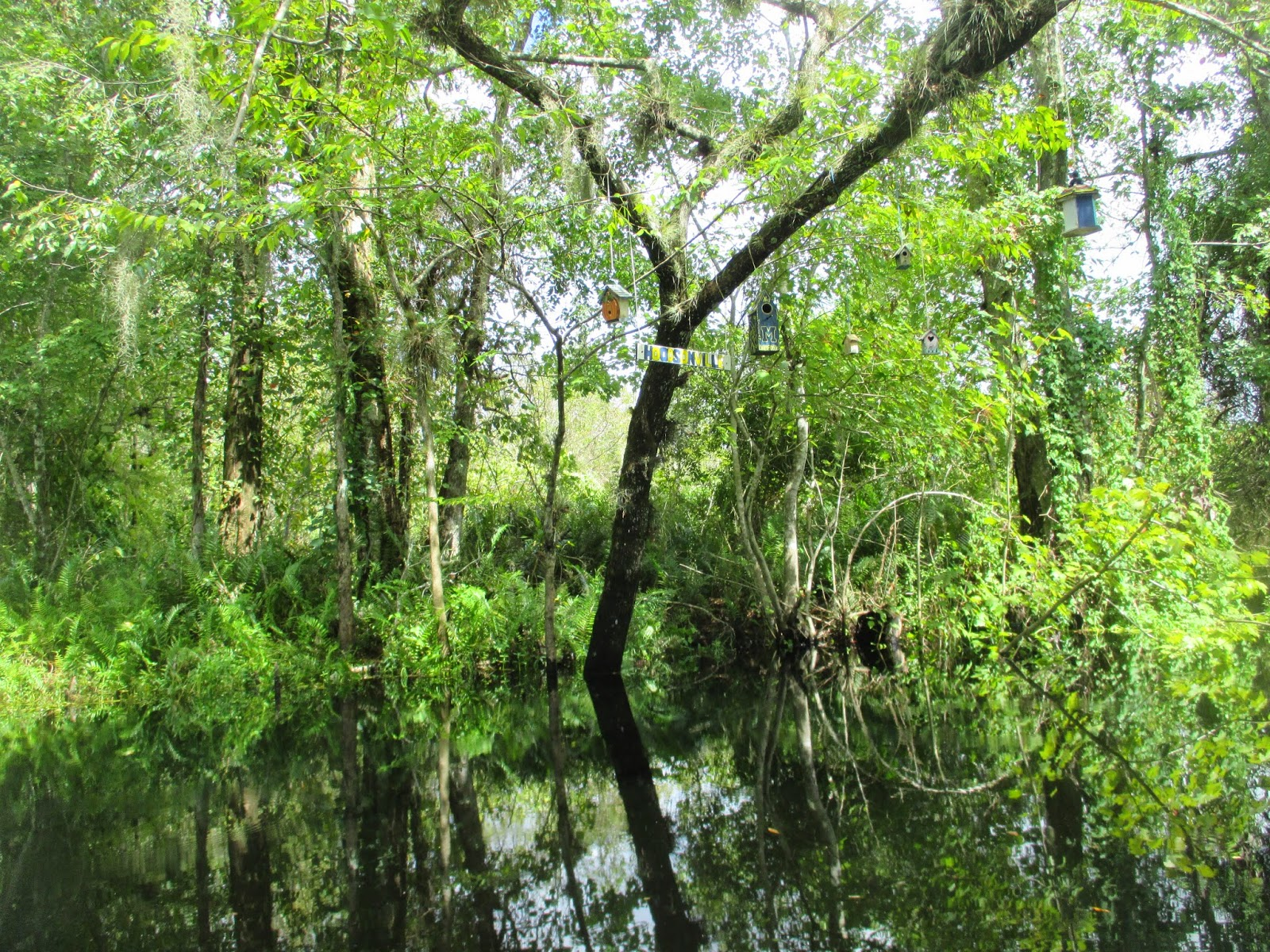 Florida Snakehead Fishing in South Florida Urban Canals