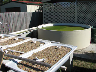Aquaponic Bathtubs