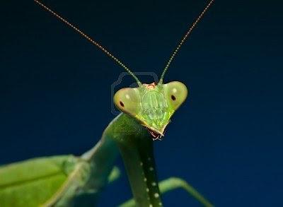 hình ảnh đẹp bọ ngựa, ảnh đẹp các loài động vật, ảnh đẹp động vật, ảnh đẹp côn trùng,