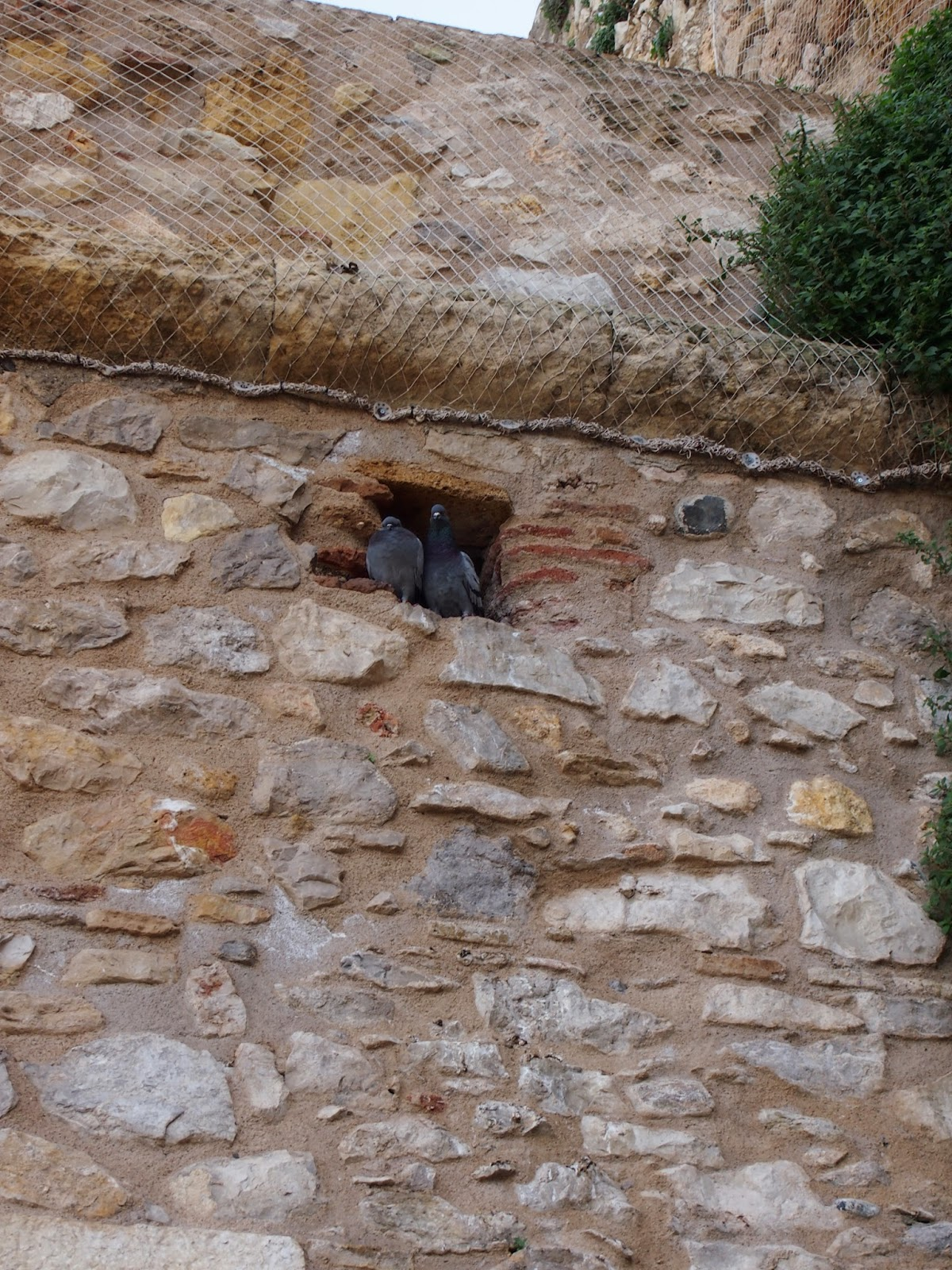 pigeons nesting in an old wall