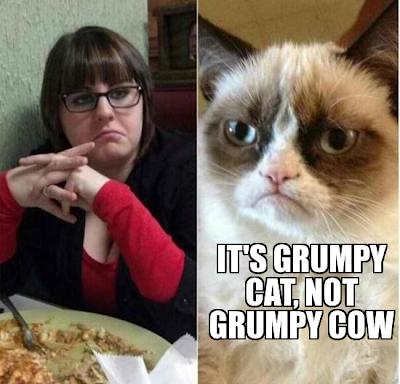 grumpy Cow