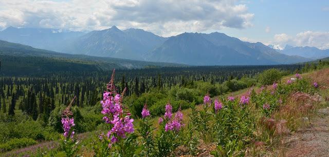 Matsu Valley flowers