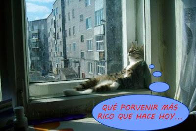 El simbolismo de las ventanas. Gato+en+la+ventana+9