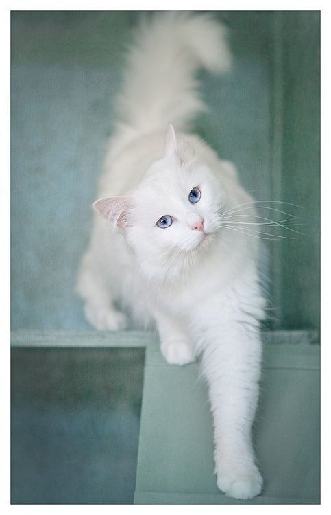 10 Cats That Are Prettier Than Most Humans