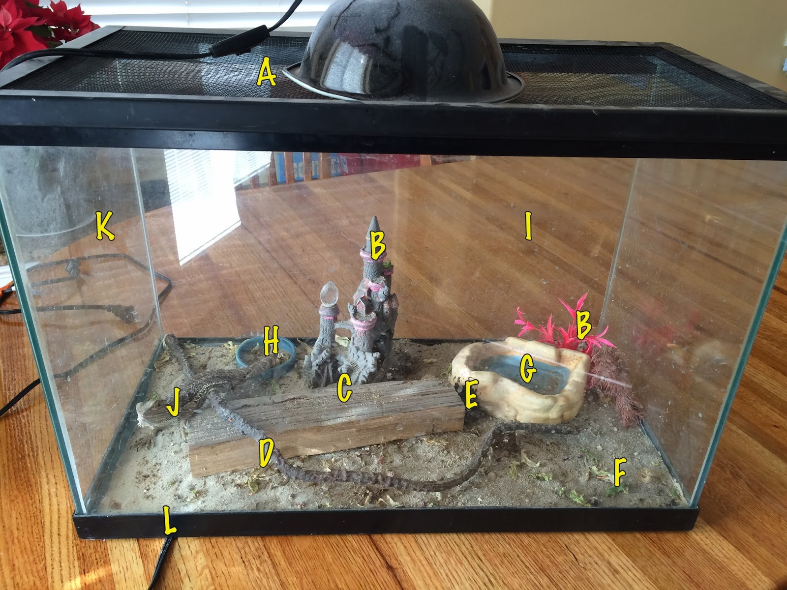 Sarah\'s Bearded Dragon Rescue: The Anatomy of a Really BAD Tank