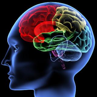 بحث أمريكى:مادة بالمخ هى المتسببة فى النسيان وسيحاول العلماء مقاومة النسيان