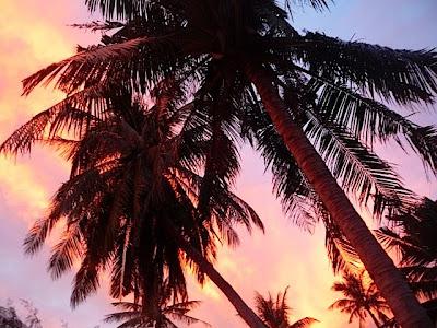 Koh Samui palm trees silhouettes on orange sunset