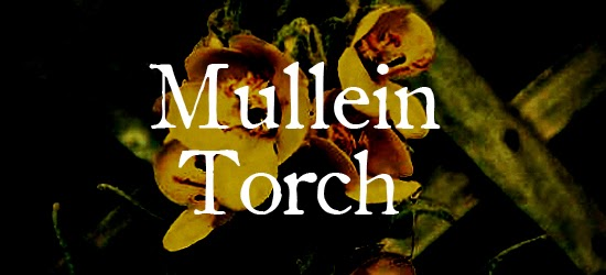 Mullein Torches & Candles