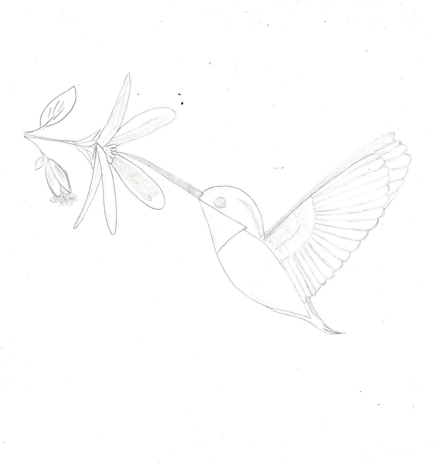 paper doll eve a dreams the birds hummingbird coloring