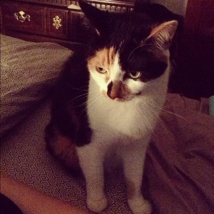 Rita, a calico cat