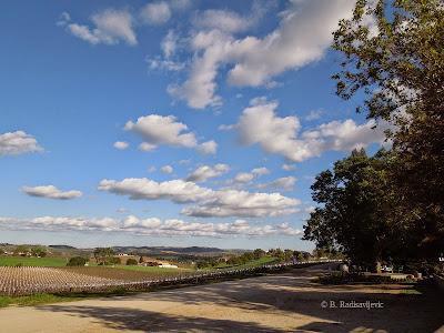 Scenic View of Doce Robles Vineyard, Paso Robles, © B. Radisavljevic