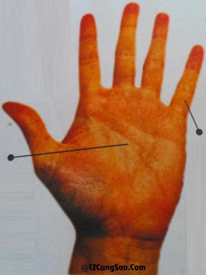 Bàn tay hình Hỏa & xem tướng số của bàn tay này!