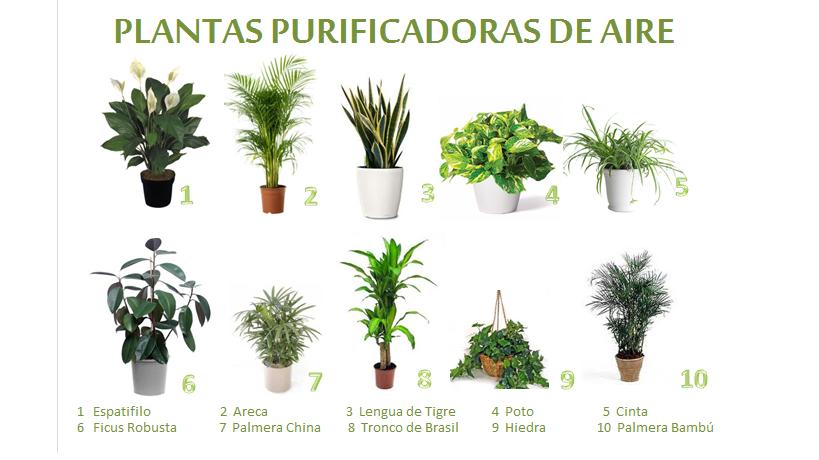 Una casa sana plantas purificadoras 9 hiedra inglesa for 5 nombres de plantas ornamentales