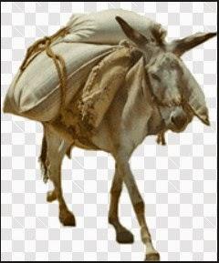 perumpamaan orang kristen bodoh n tolol seperti keledai membawa kitab