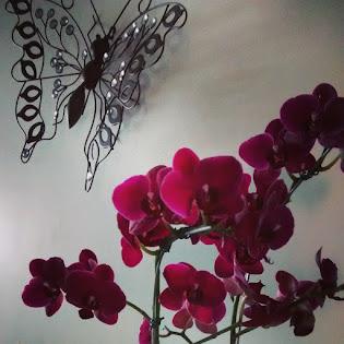 flores sempre !