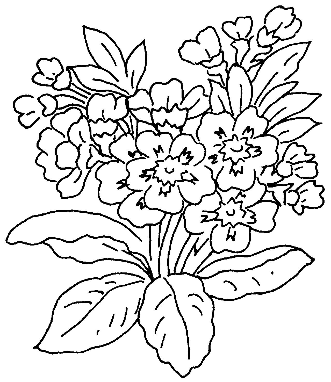 Disegni da colorare pimpa for Primule immagini
