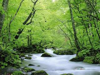 Green Nature Wallpapers