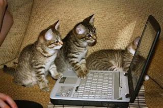 smešna slika: mačke Gledaju film na laptopu