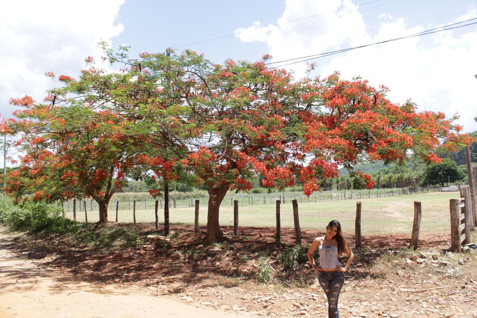 Jéssica Guedes Januária, Norte de Minas Gerais