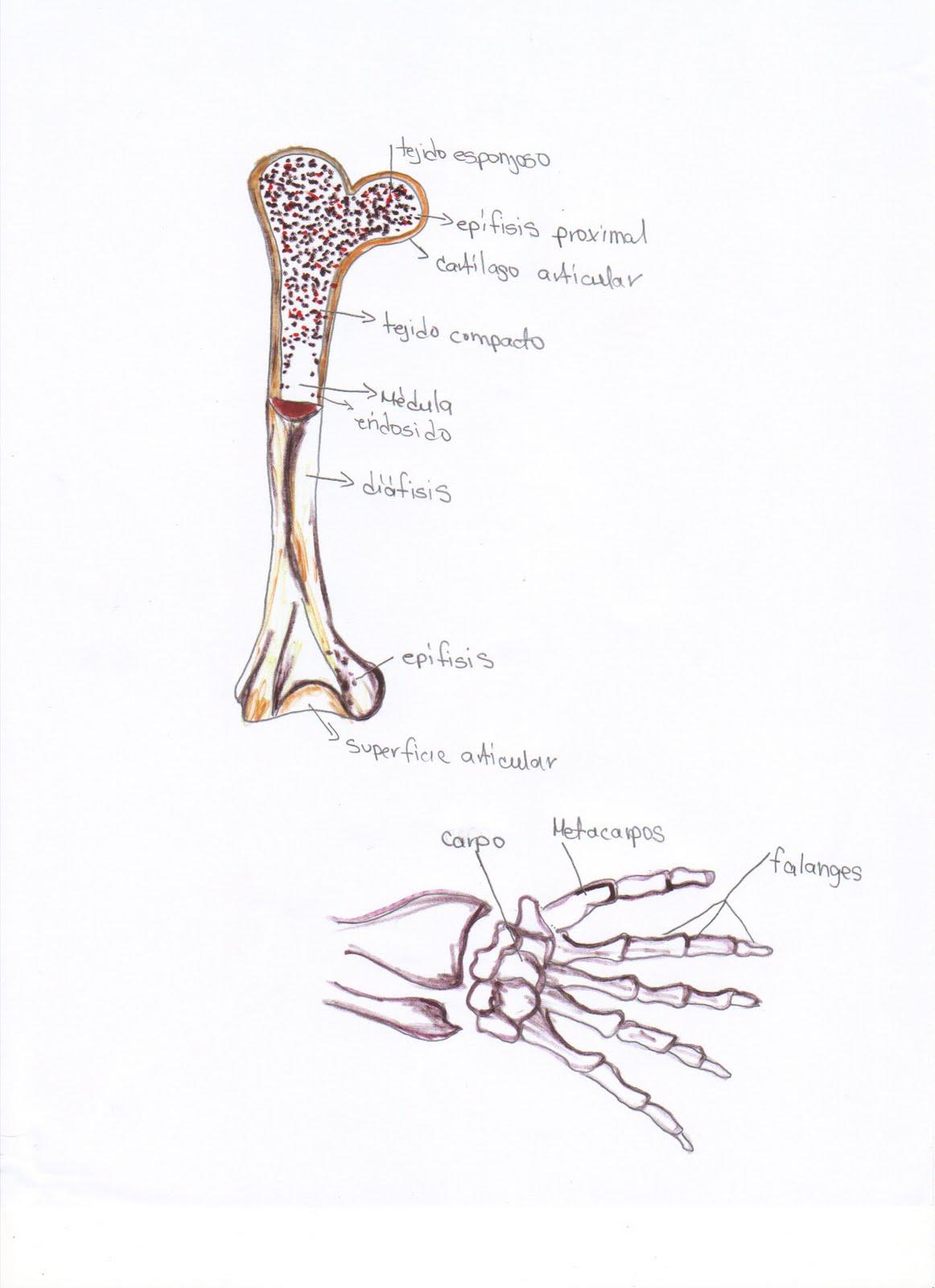 Anatomia.Cibi3002