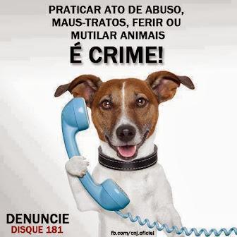 NÃO MALTRATE OS ANIMAIS